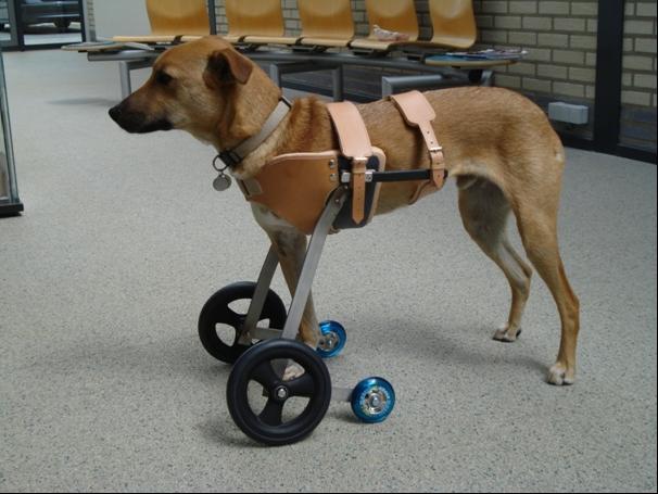 Custom made animal wheelchair
