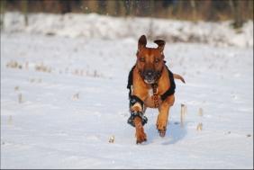 Dog Elbow Brace for Elle