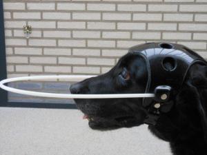 Cranial Helmet for Blind Dog