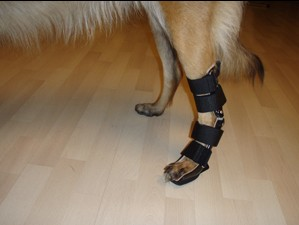 omni with tarsal brace